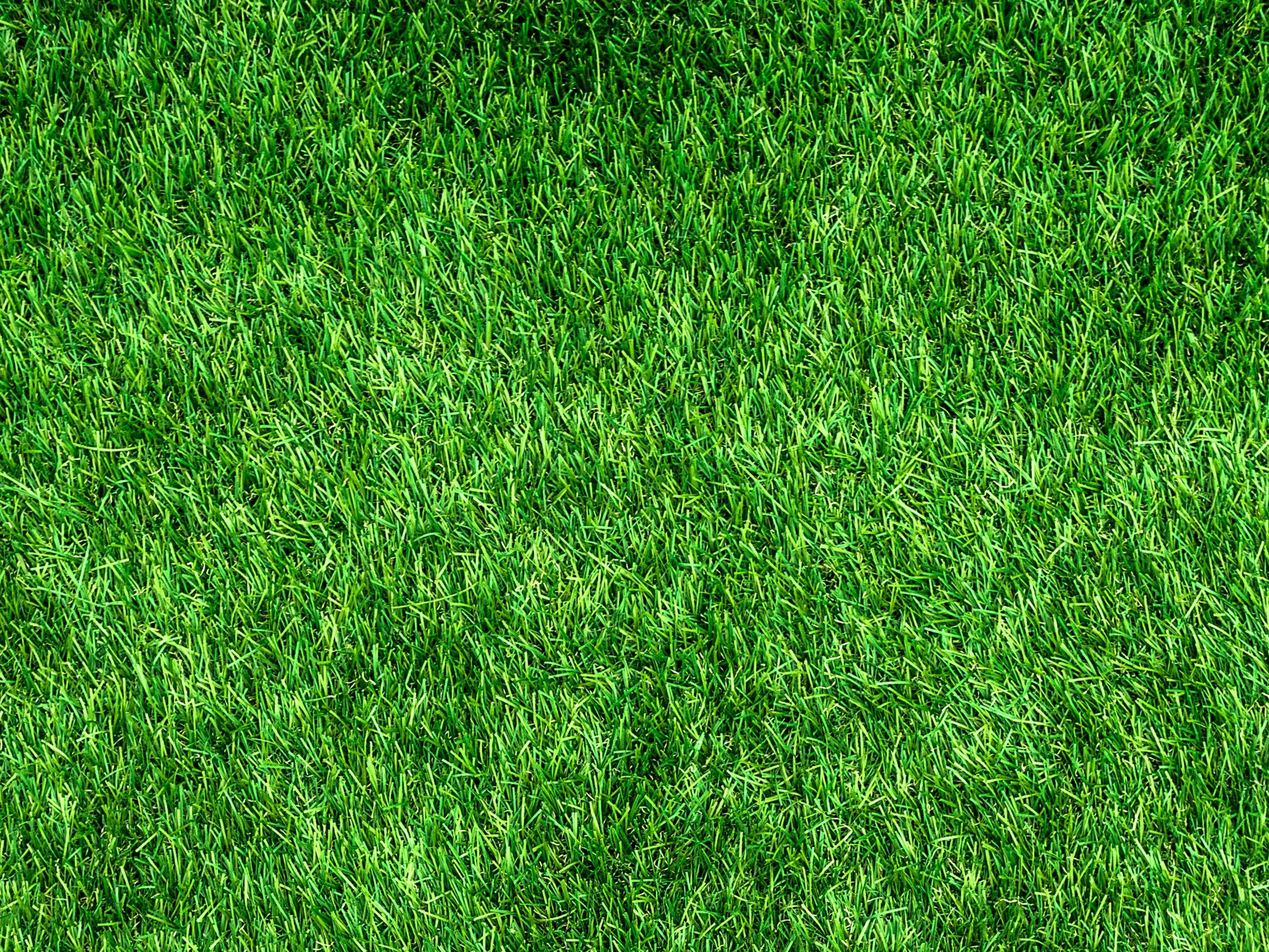 Artificial Grass Leicester